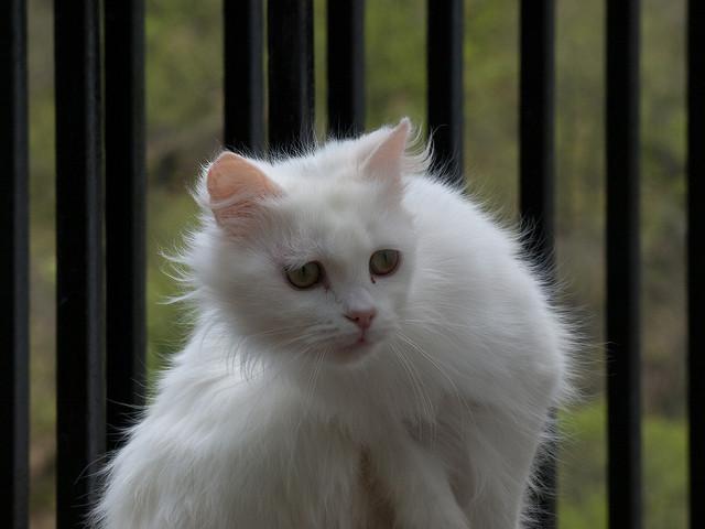 Стадия тревоши у котенка