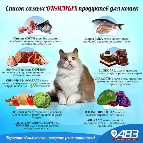 Продукты, не подходящие для питания кошек