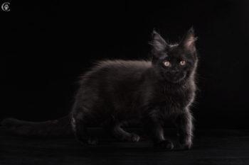 окрас черный солид