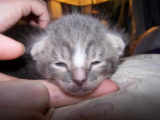 Новорожденный котенок на руках