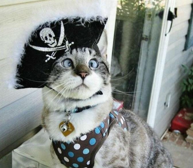 Капитан Кот