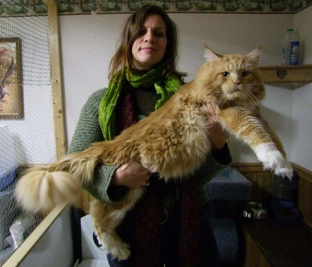 Рыжий кот на руках хозяйки